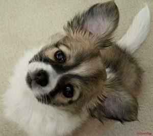 Welpenpflege im Hundesalon